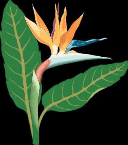 clipbird-of-paradise-bloom