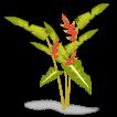 clipbirdsheliconia